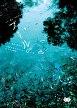 20080505_pool.jpg