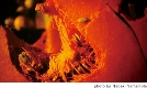 20090305_fireface.jpg